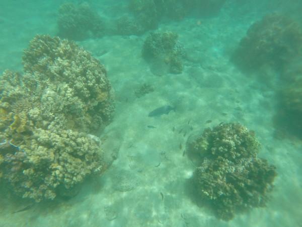 Honolua Bay(ホノルア ベイ)水中