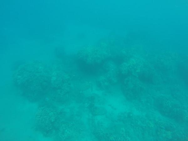 ウミガメ発見!