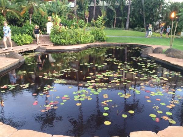 ワイレアビーチマリオットの中庭の池