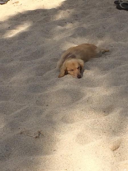 ビーチで昼寝するワンコ