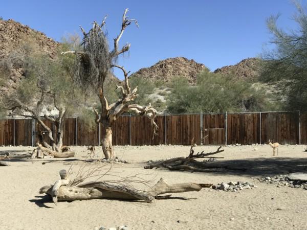 The Living Desert